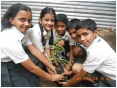 Sapling plantation at School